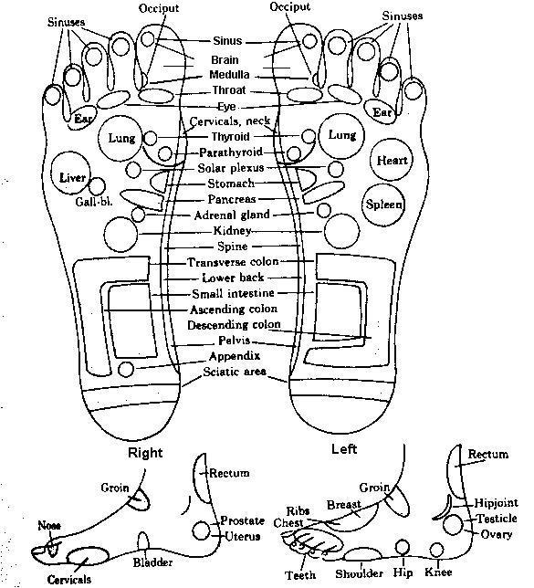 Рефлексни точки на краката