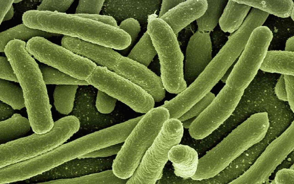 Бактерия