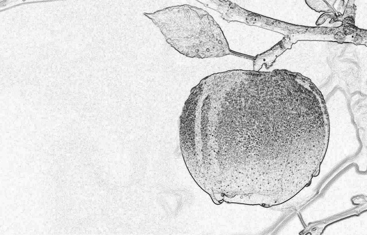 Съновник - ябълка