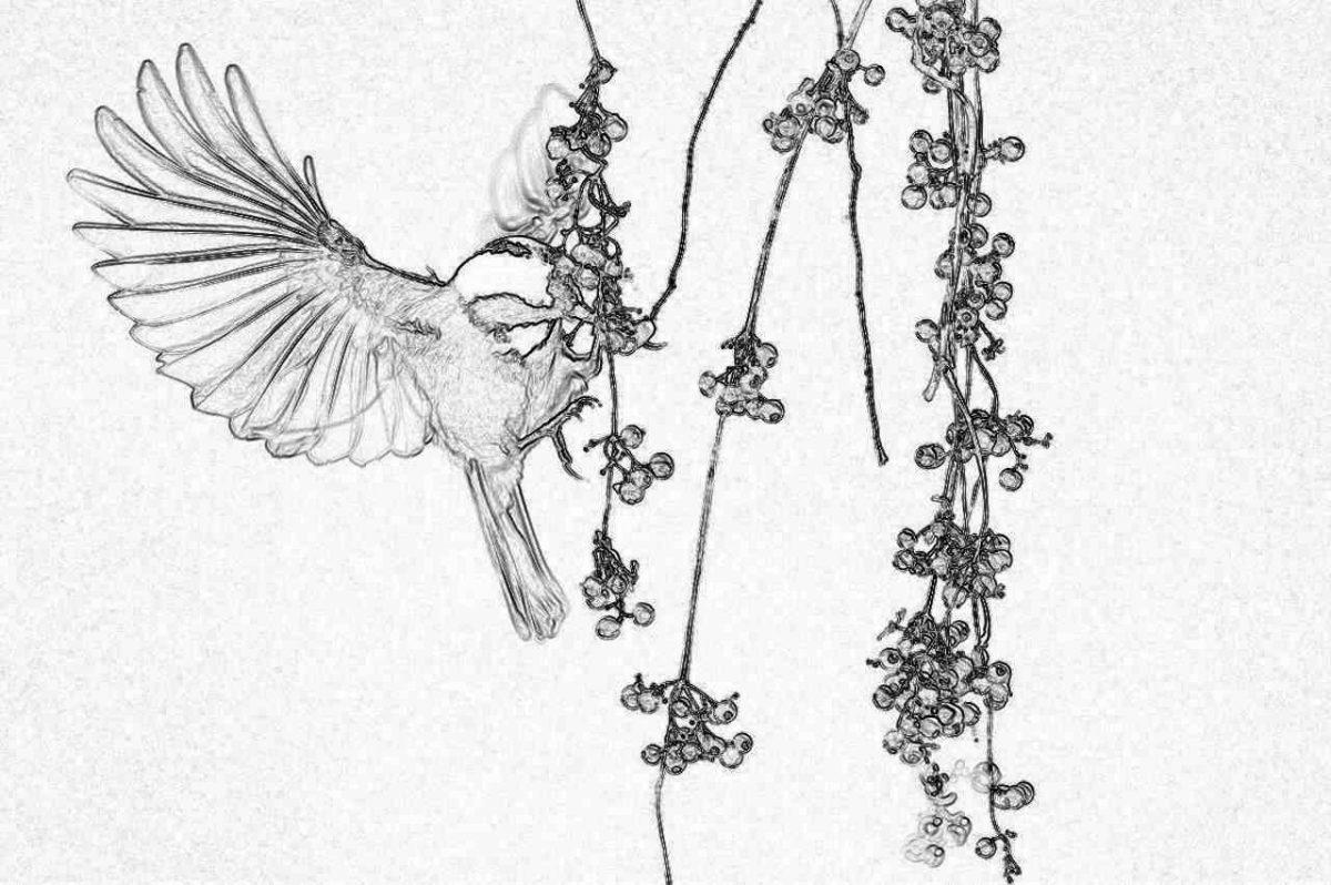 Съновник - птици