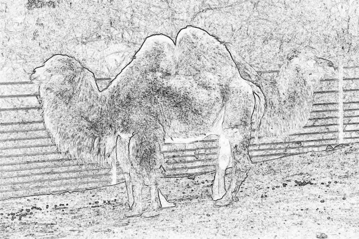 Съновник - гърбав, гърбица