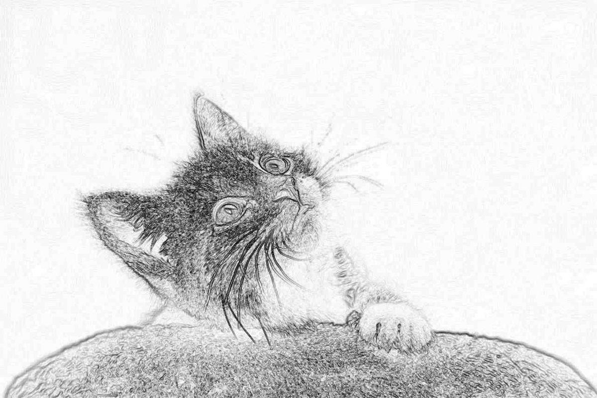 Съновник - котка