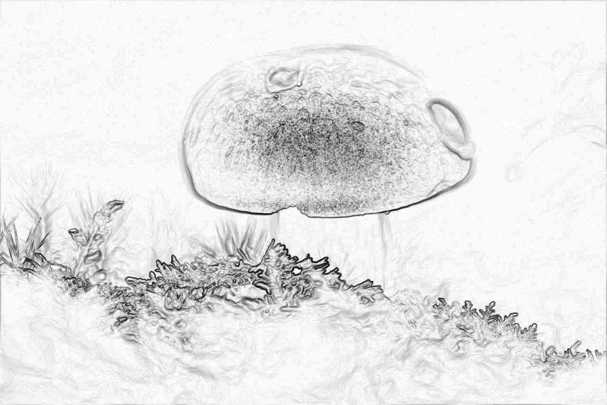 Съновник - гъби