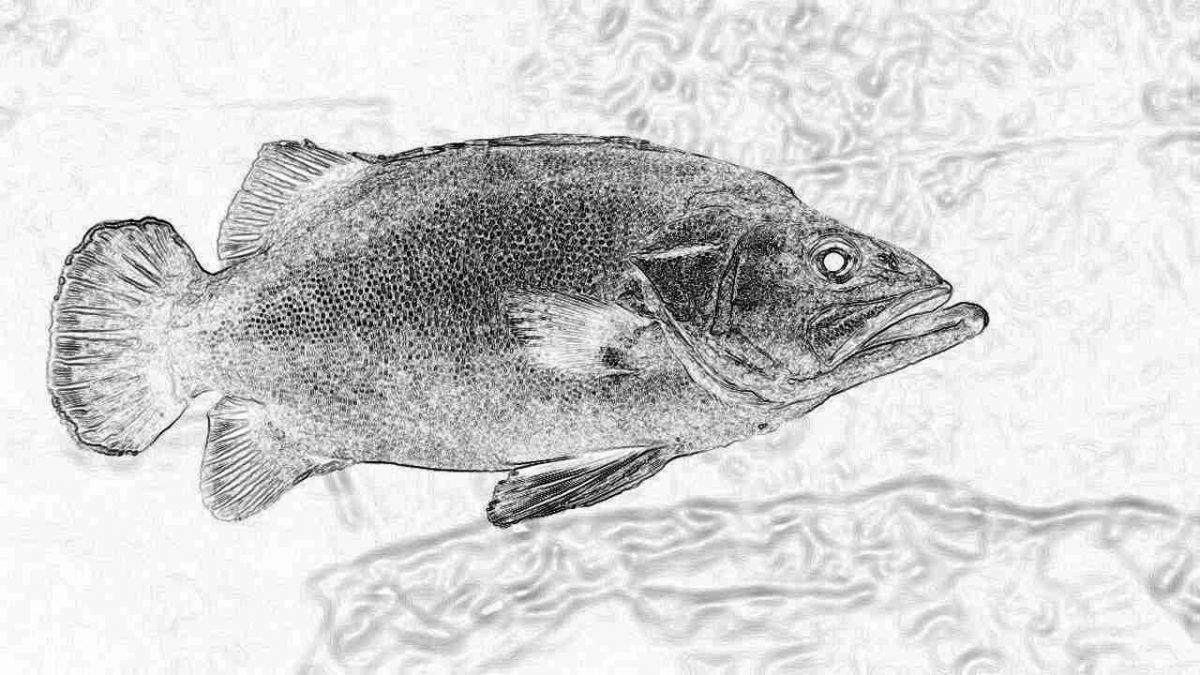 Съновник - риба, риби