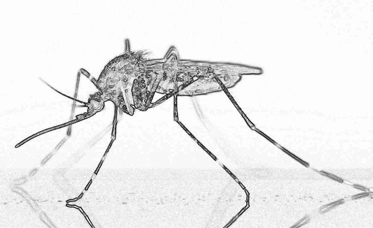 Съновник - комар