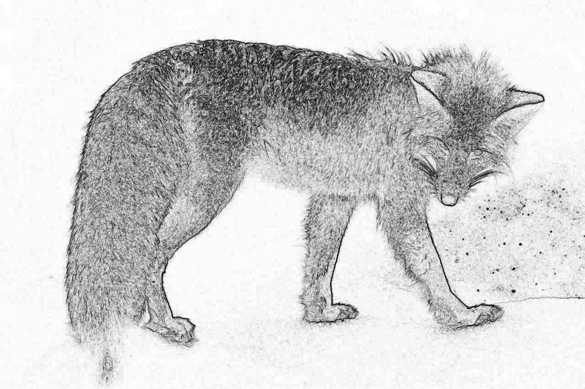 Съновник - лисица