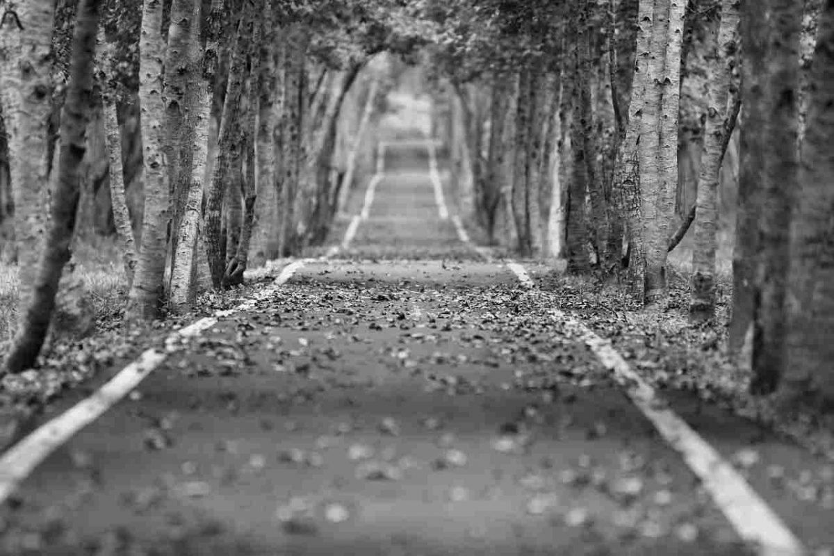 Съновник - път