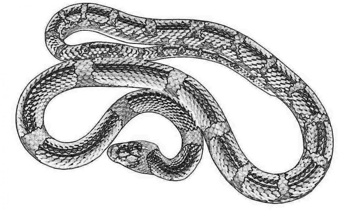 Съновник - змия