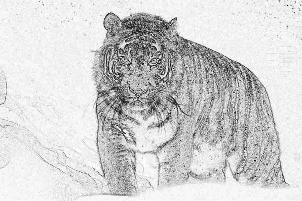 Съновник - тигър