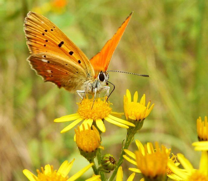 butterfly_10