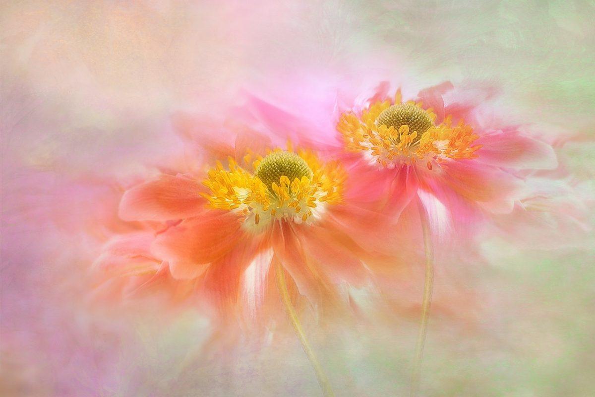 Оздравяване на стомашно-чревна флора